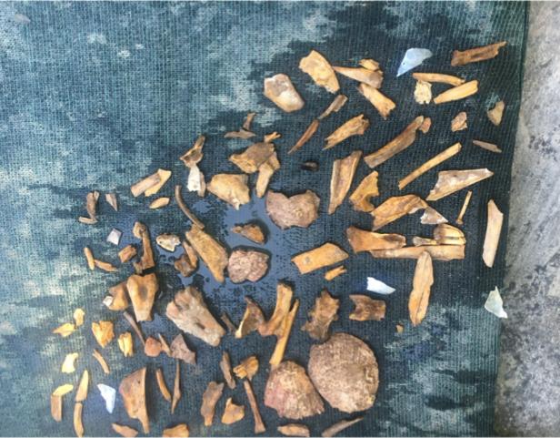 Robyn animal bones